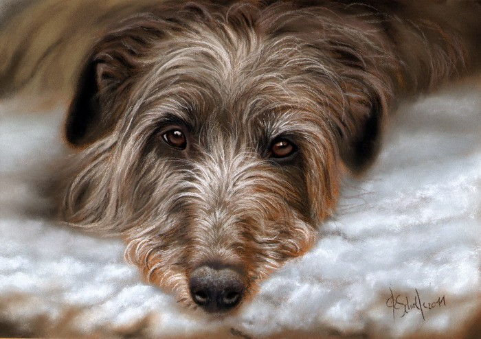 Deerhound pastel portrait